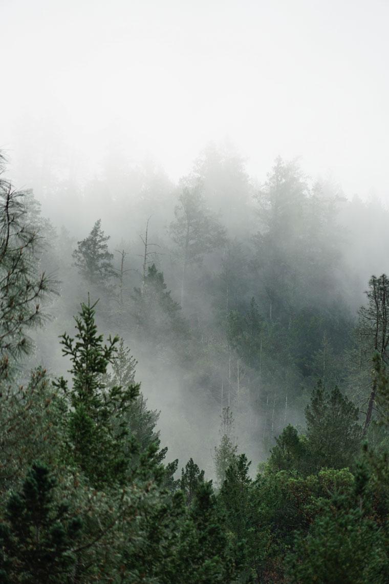 napa-forest-3.jpg