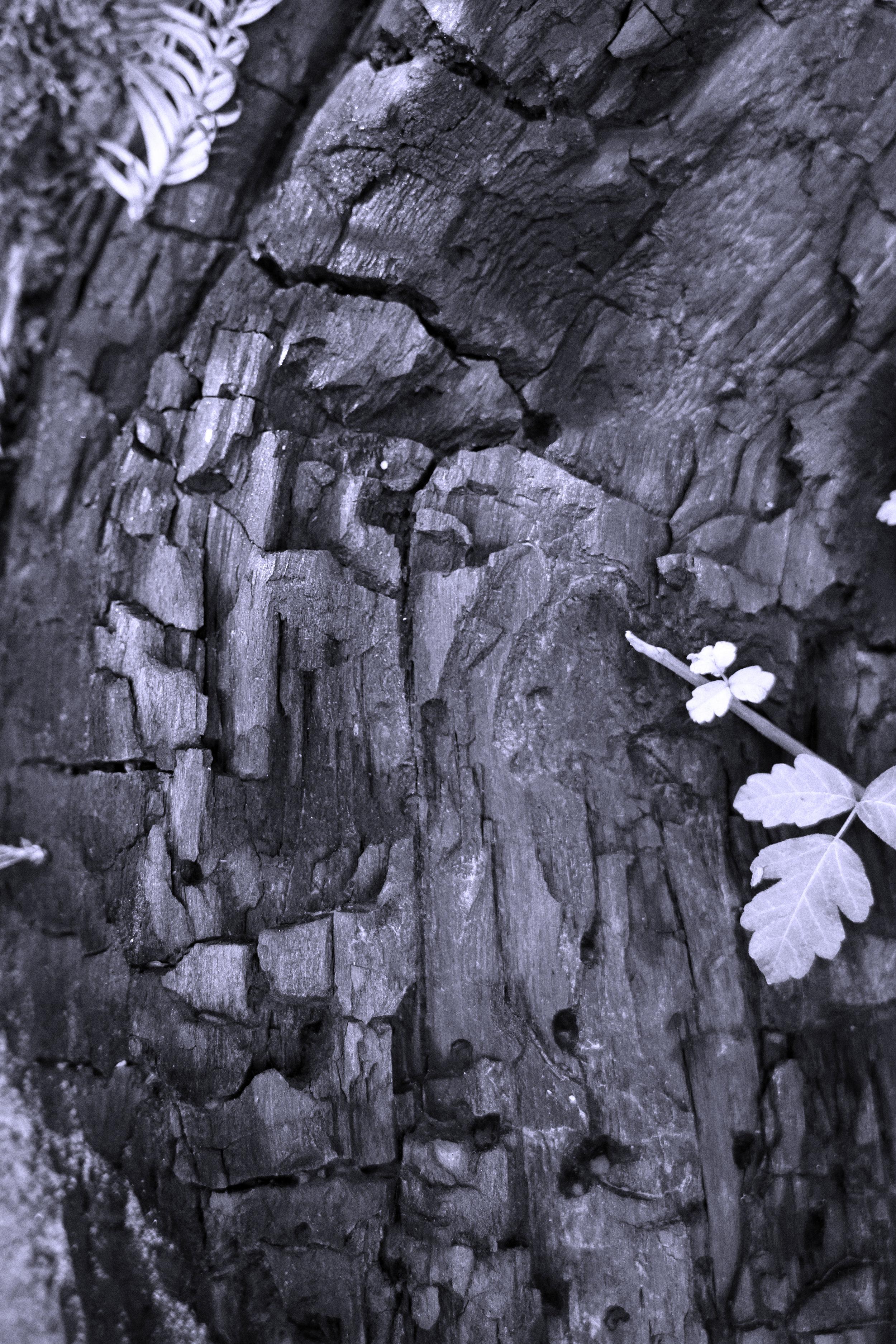 Burnt Tree.jpg