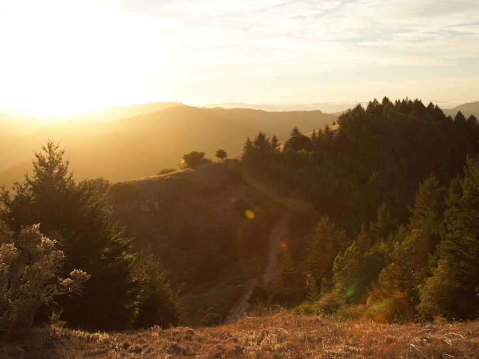 Redwoods32.jpg