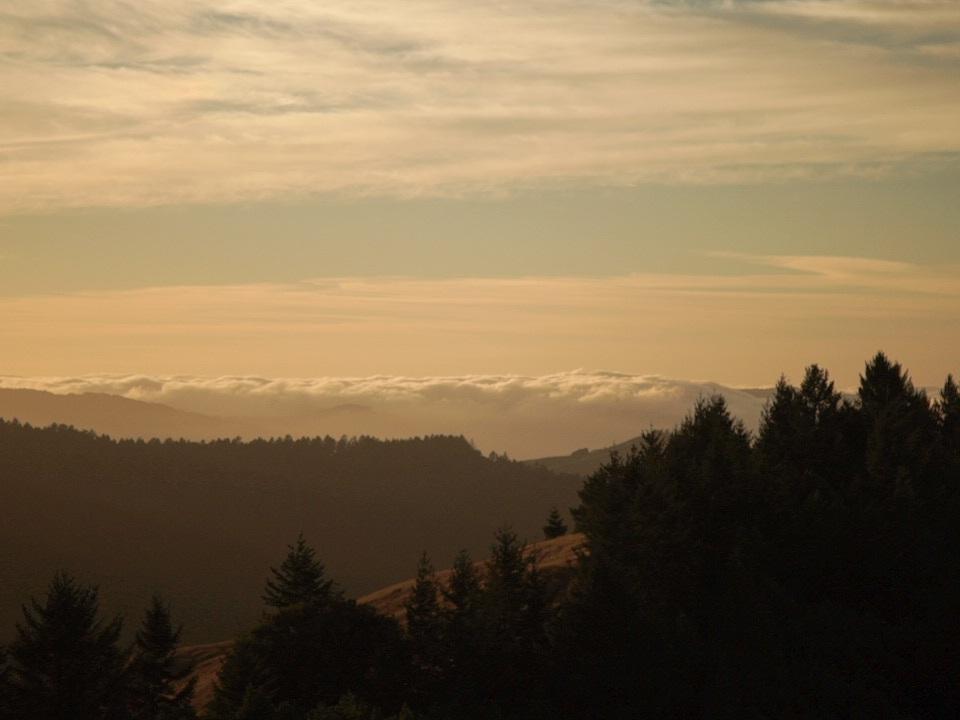 Redwoods33.jpg