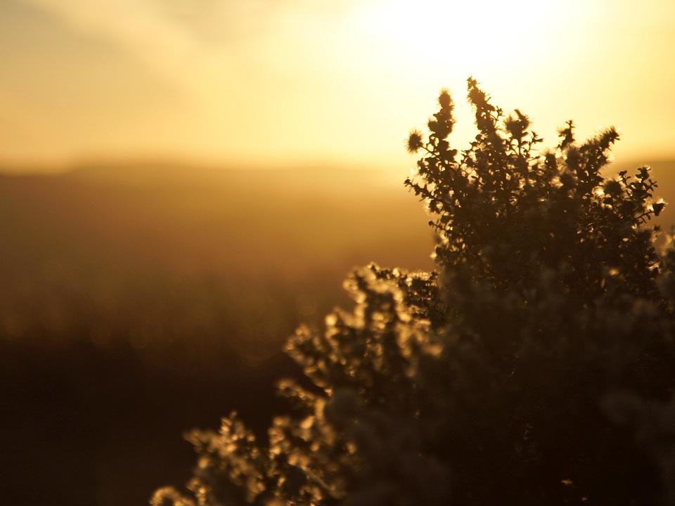Redwoods34.jpg