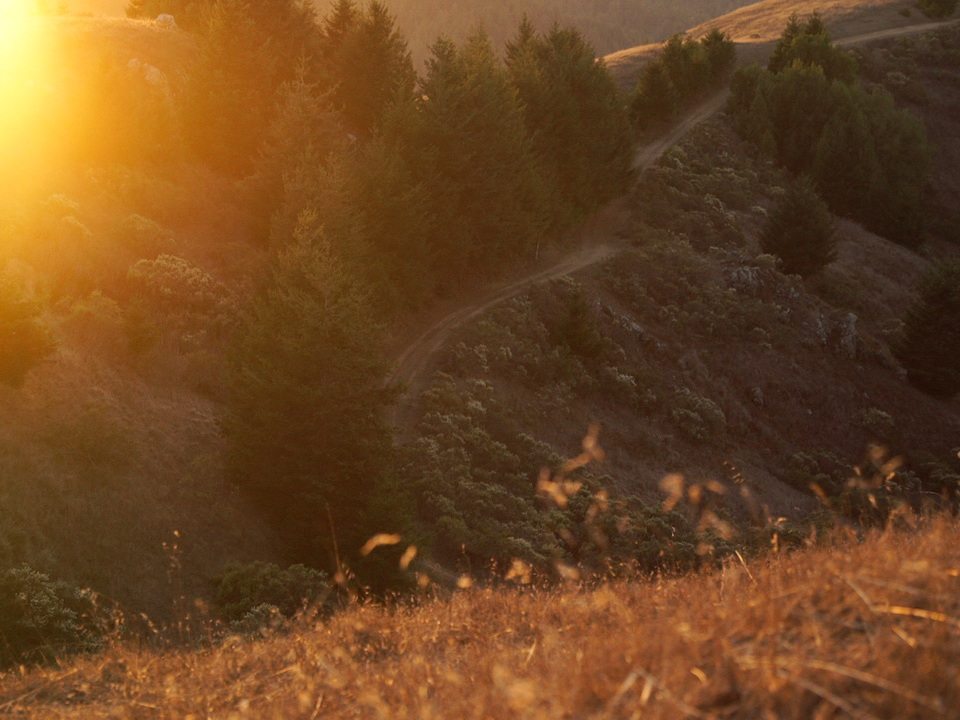 Redwoods42.jpg