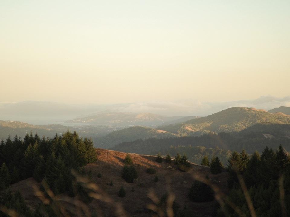 Redwoods35.jpg