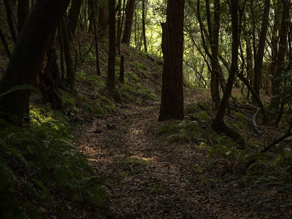 Redwoods18.jpg
