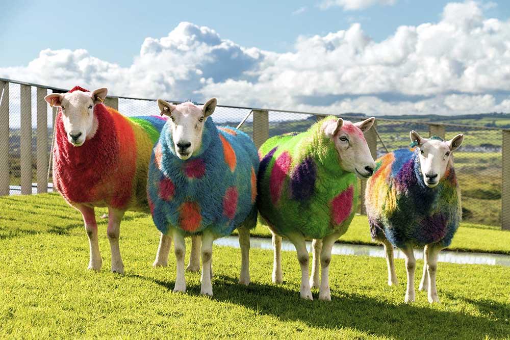 EQ 2 sheep.jpg