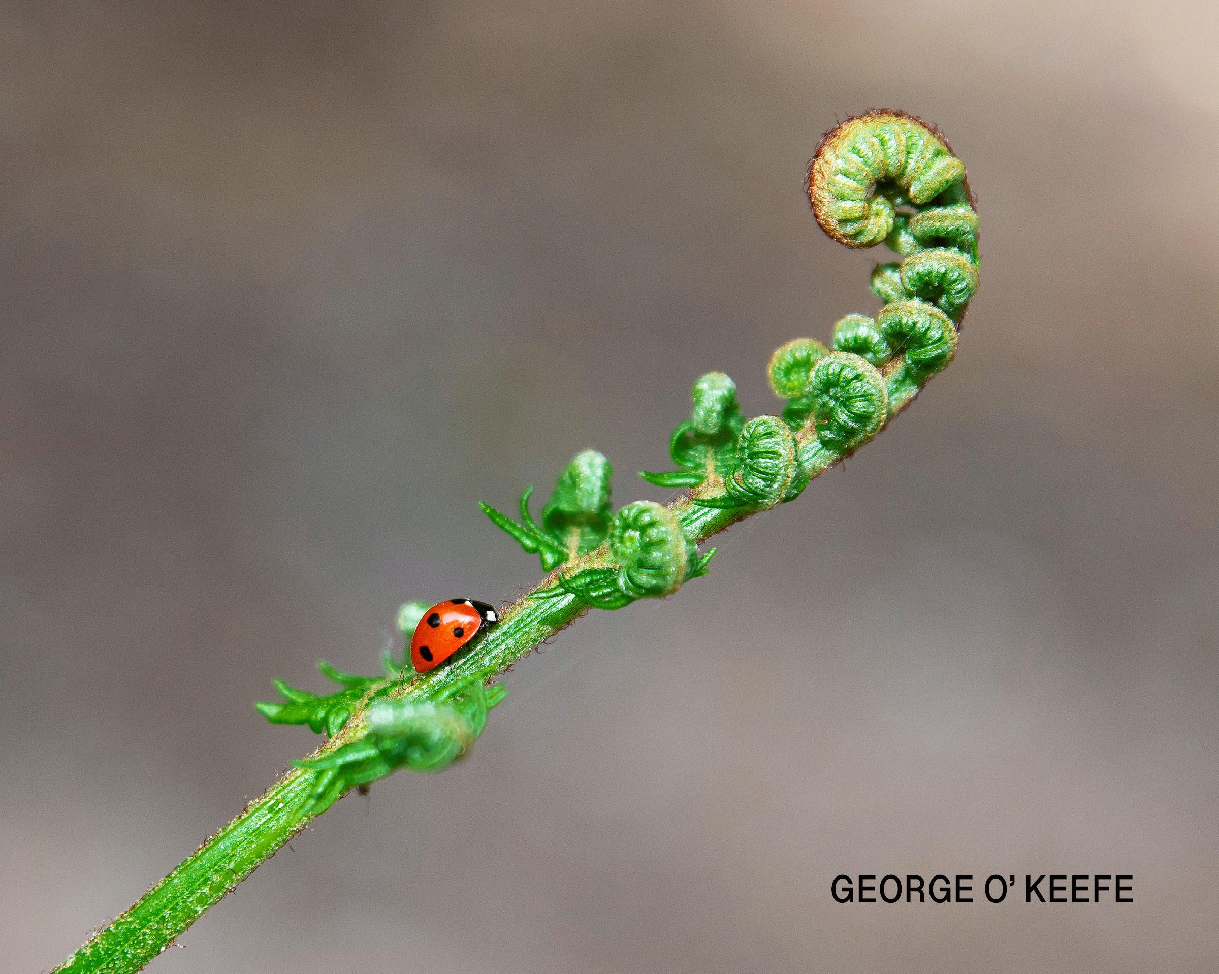 04 George O'Keeke FCC.jpg