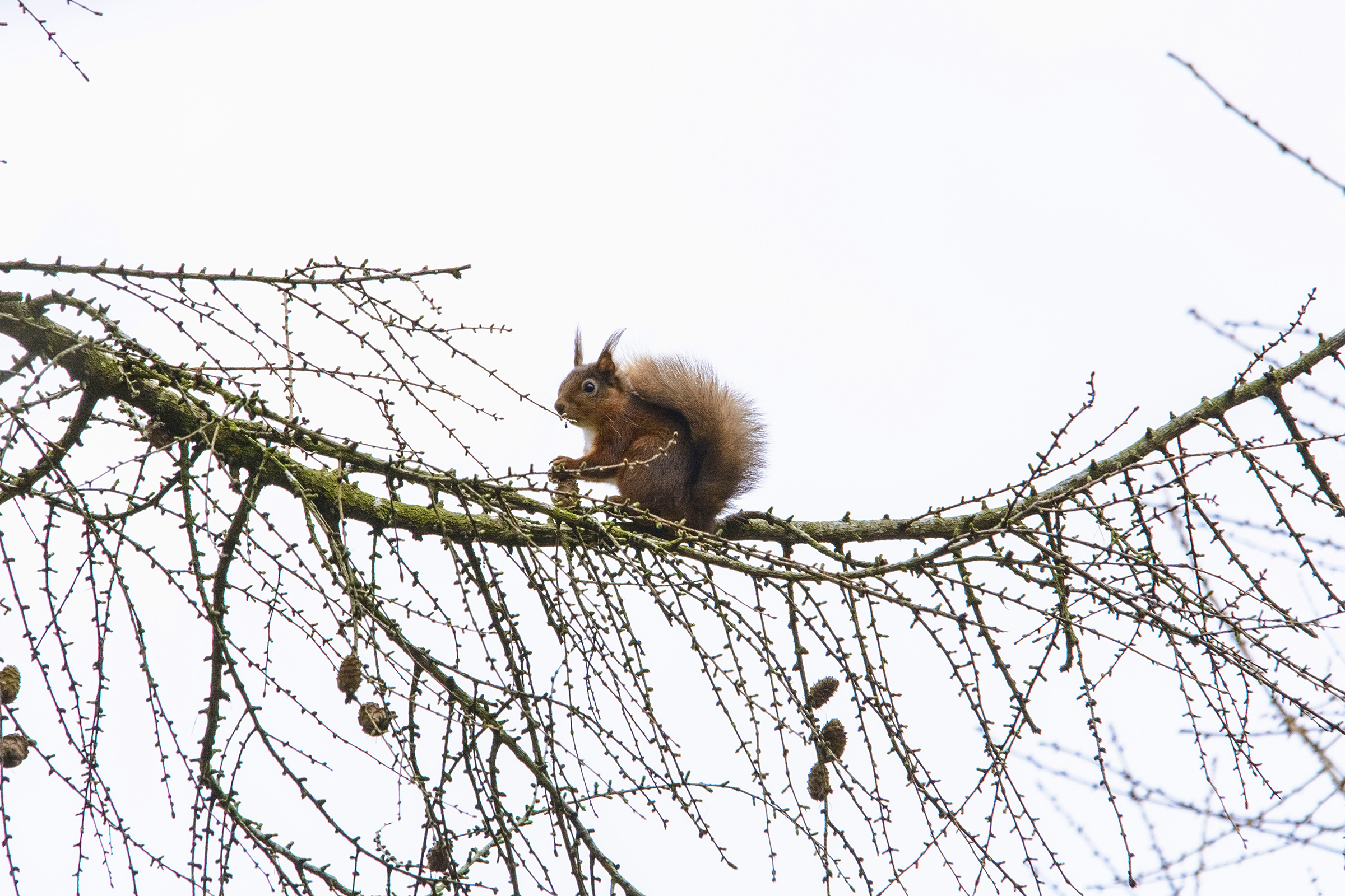 10 SQUIRRELL IN TREE.jpg
