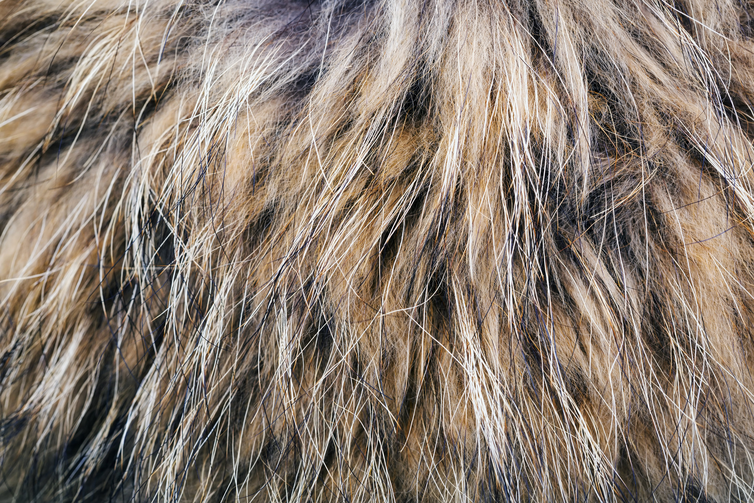 Fur Care - Do's & Don'ts