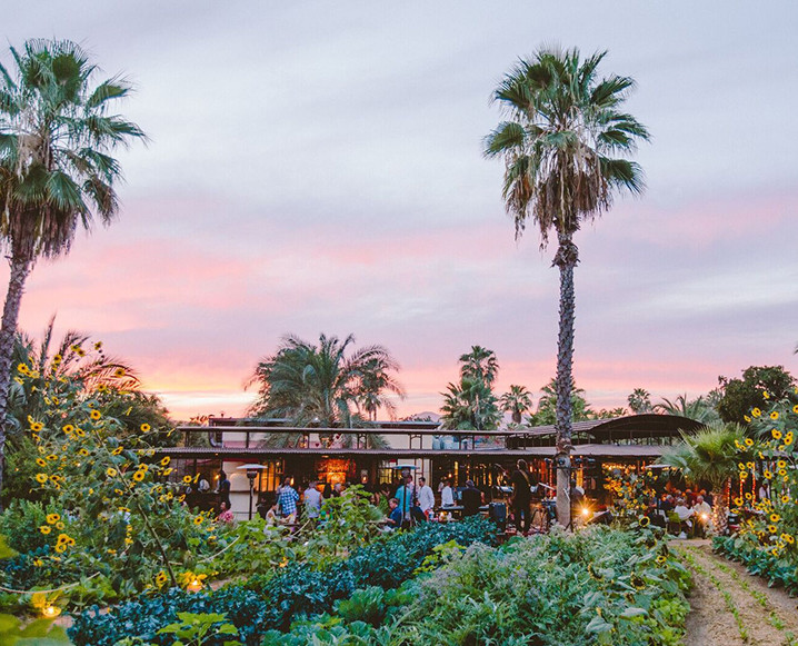 Flora Farms   | Carretera Transpeninsular, Km. 30 Las Ánimas Bajas Tel:  +52 624.142.1000   Rustic farm-to-table restaurant on a 25-acre working farm in the foothills of the Sierra de la Laguna Mountains. Expect some of the best pizza you'll ever eat (besides The Nice Guy, of course) and an insane farm-to-glass cocktail list. Alex recommends picking up some of the homemade granola from their market for a great anytime snack. Car service is highly recommended; approximately 25-30 minutes from the Palmilla (but well worth it!)