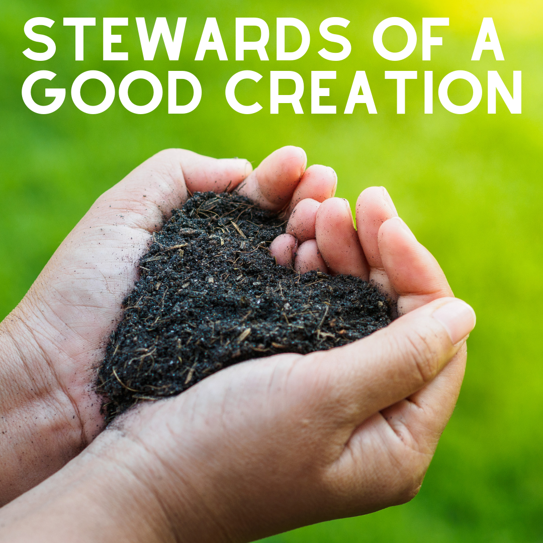Stewards of God's Good Creation - 6 October - What the bible tells us, Jack Wakefield (TearFund)13 October - Discipleship as Stewards, Rev Hugh Nelson20 October - Worship as Stewards, Wes Hinsley27 October - Lifestyle as Stewards, Lizzie Nelson3 November - Mission as Stewards, Ven Stephen Taylor