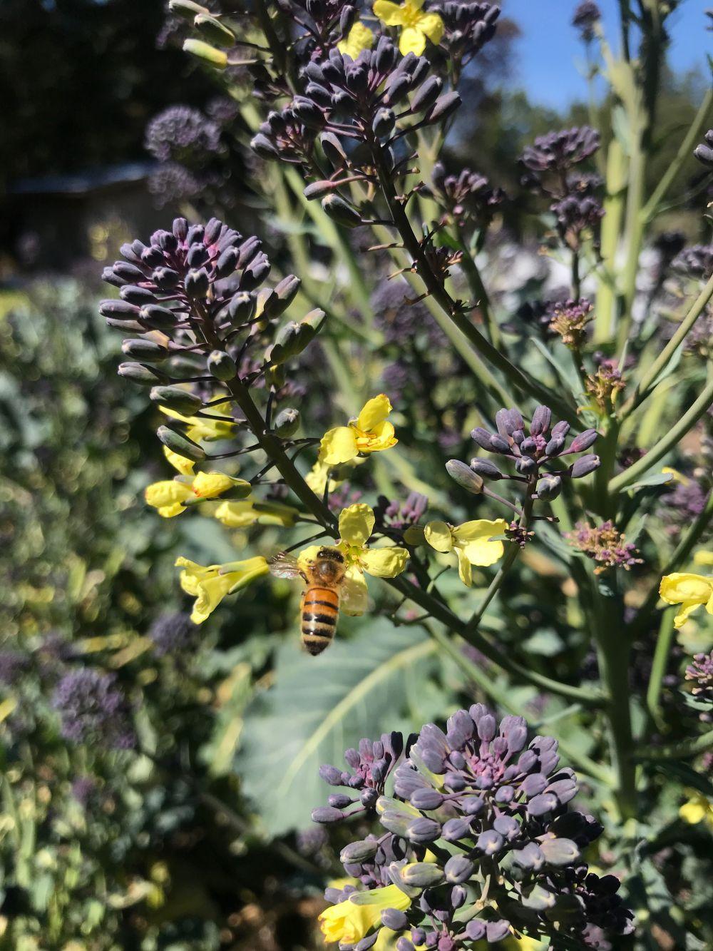 bee-flowers.jpg