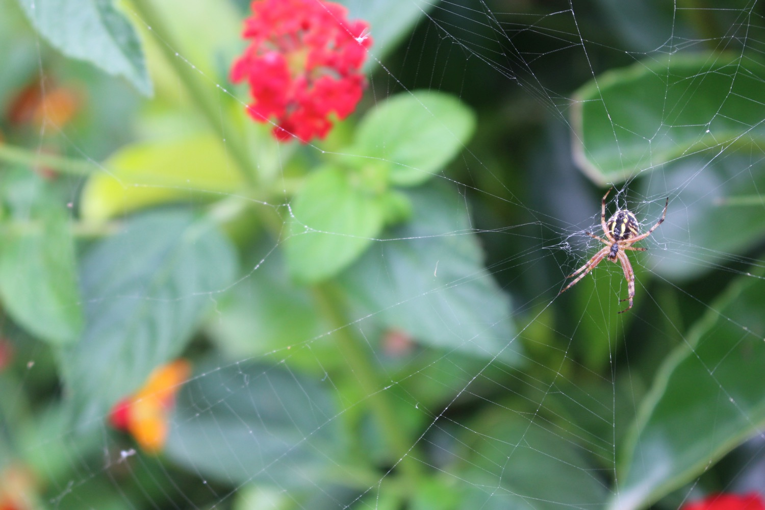 A spider building its web