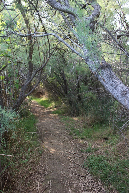 A hiking path through the reeds