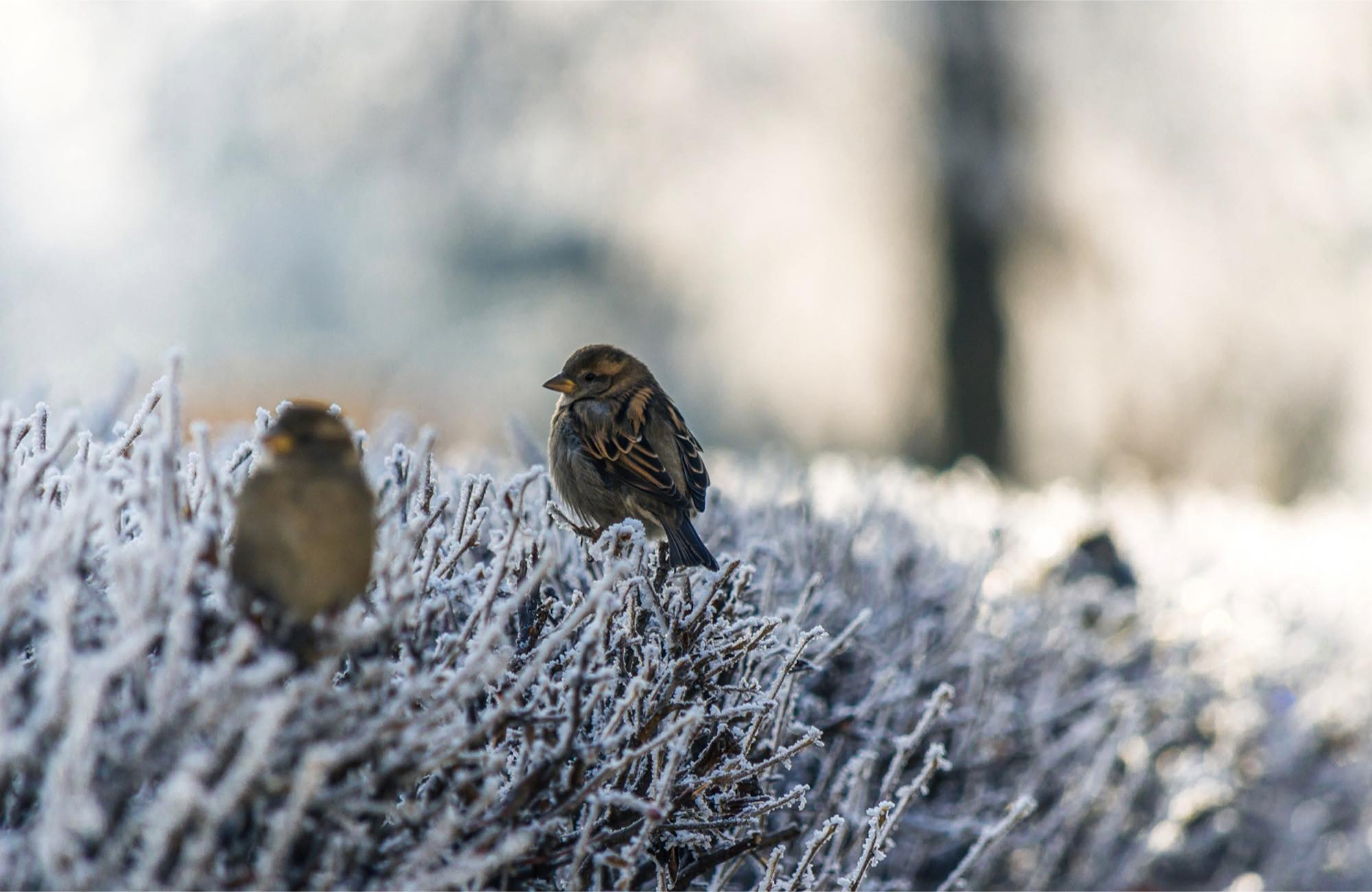 birds on snow-covered branches