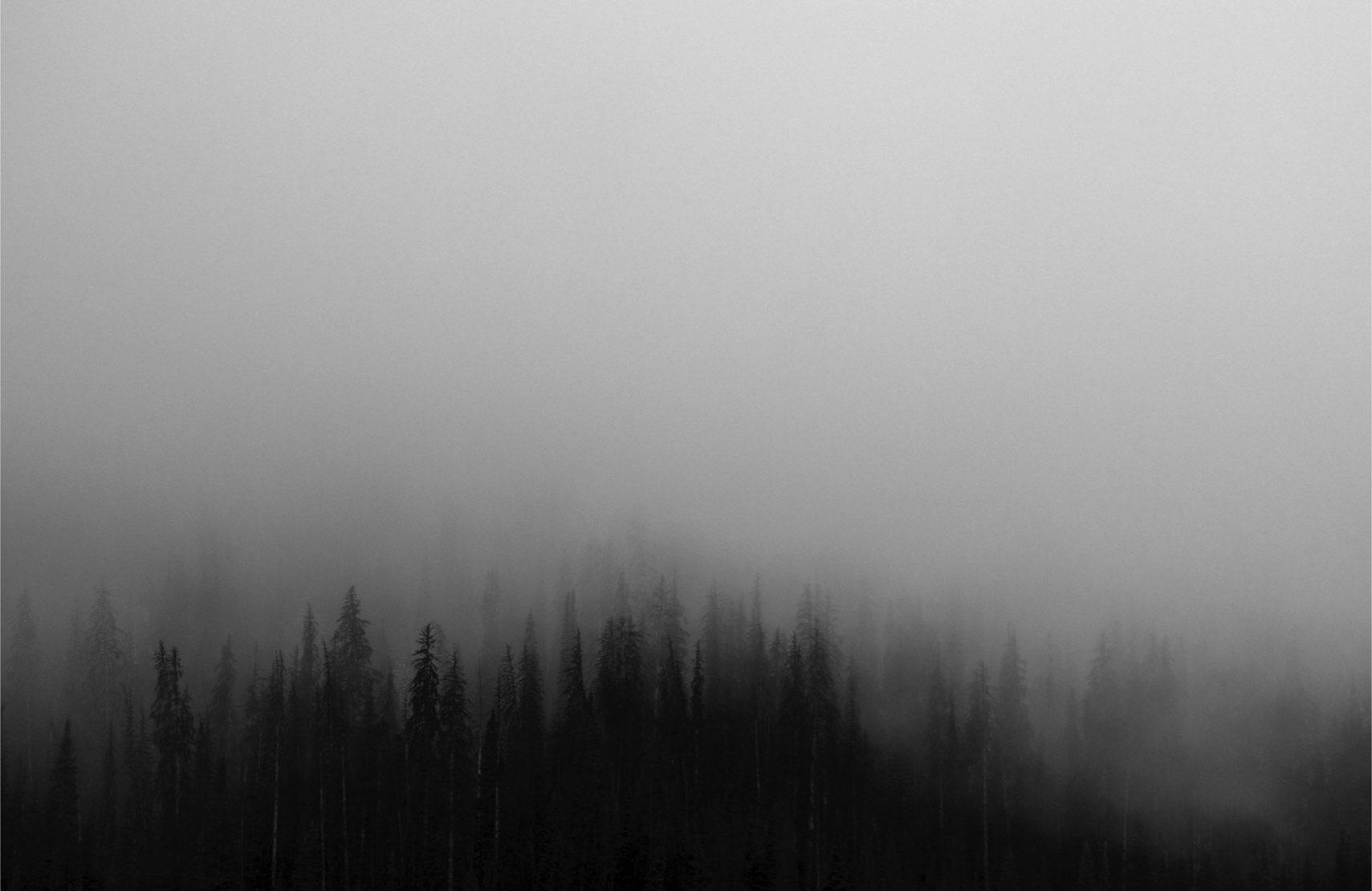 mist shrouded woods