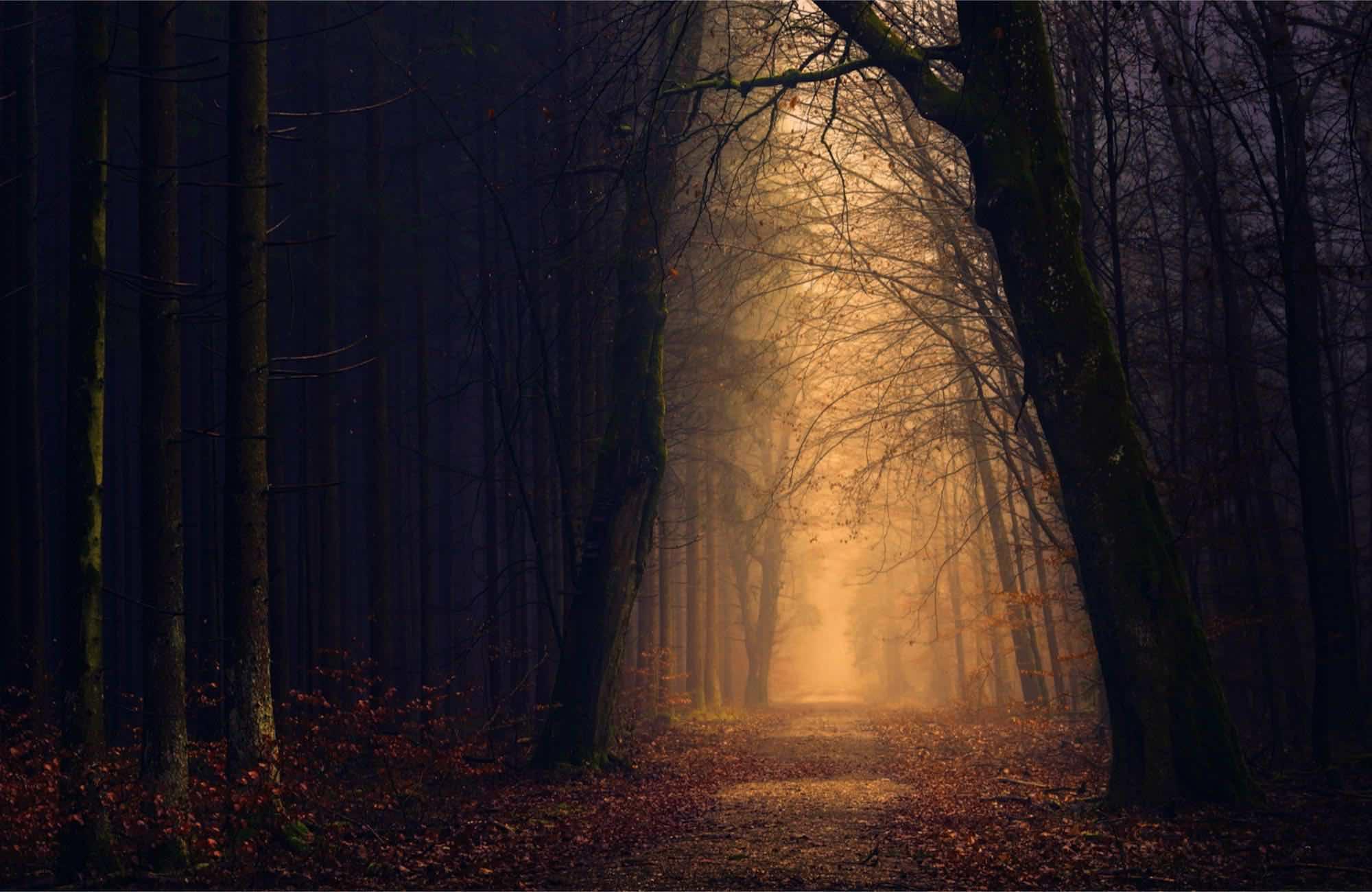 a path through autumn woods