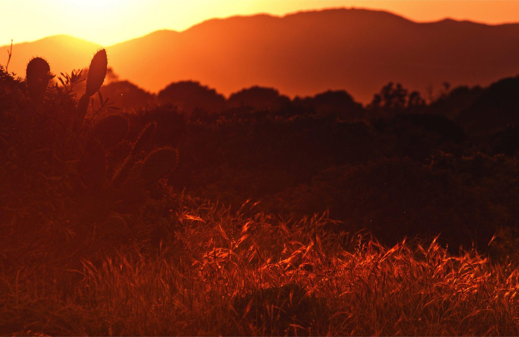 sun setting on a desert scene
