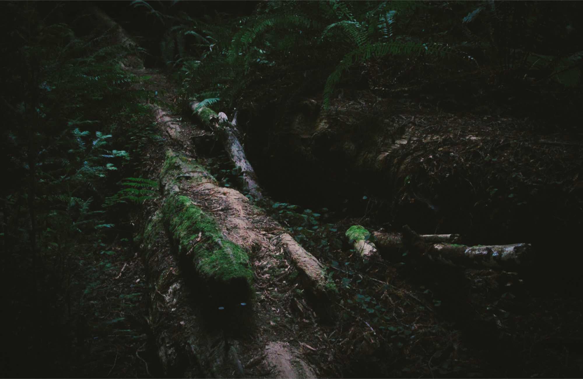 moss on a fallen tree in a forest