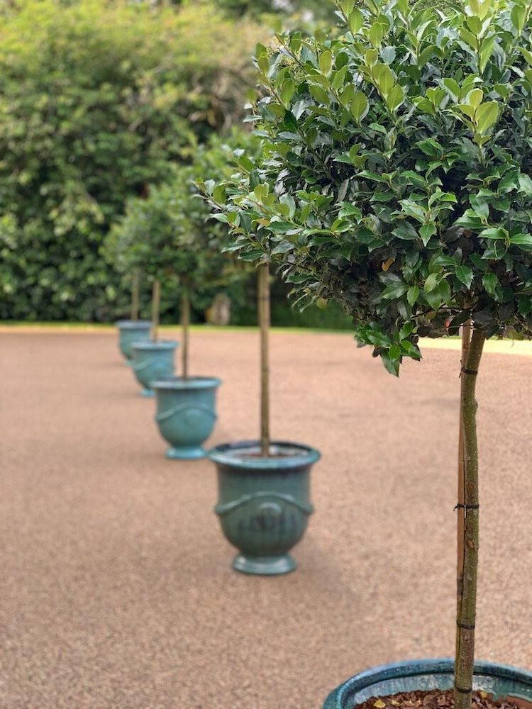 potted-bay-tree.jpg