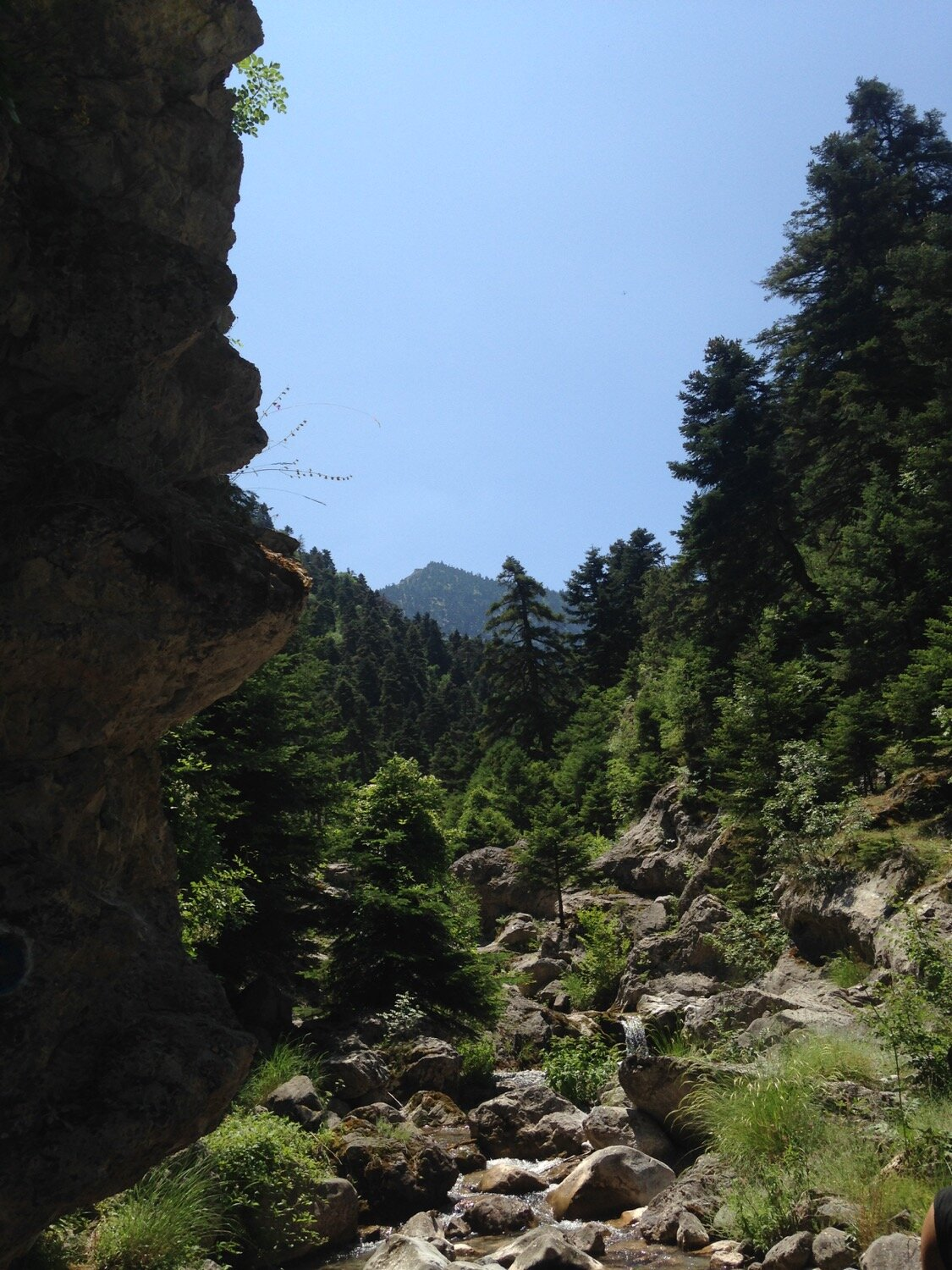Trees lining a rocky river bed on Mount Parnassos