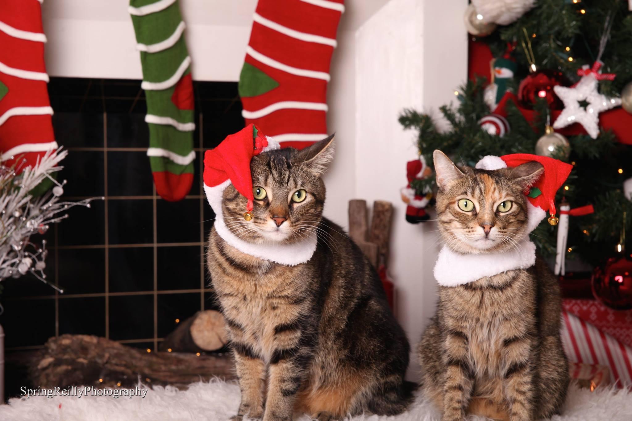 cats in santa hats.jpg