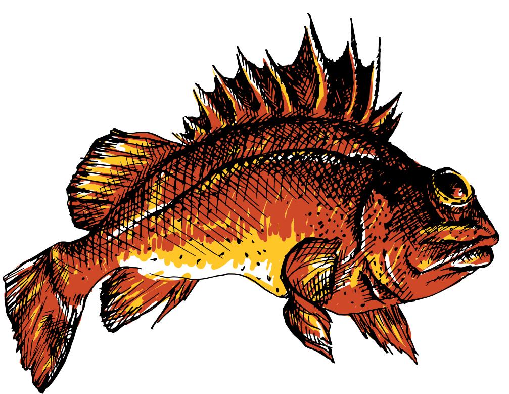 Quill-Back-Rockfish_1.jpg