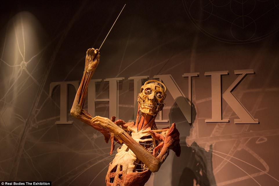 4B07EB6F00000578-5602971-A_cadaver_with_its_bones_showing_under_muscle_is_posed_as_an_orc-a-70_1523457615647.jpg