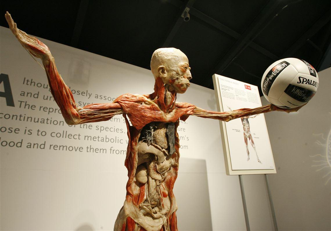 Bodies-Revealed-exhibit-extended-to-Nov-6.jpg