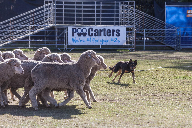 Yard Dogs-18.jpg