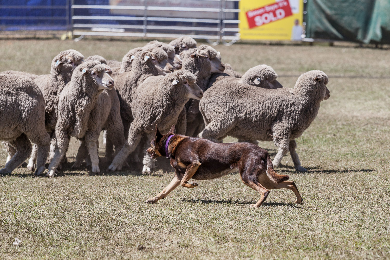 Yard Dogs-9.jpg