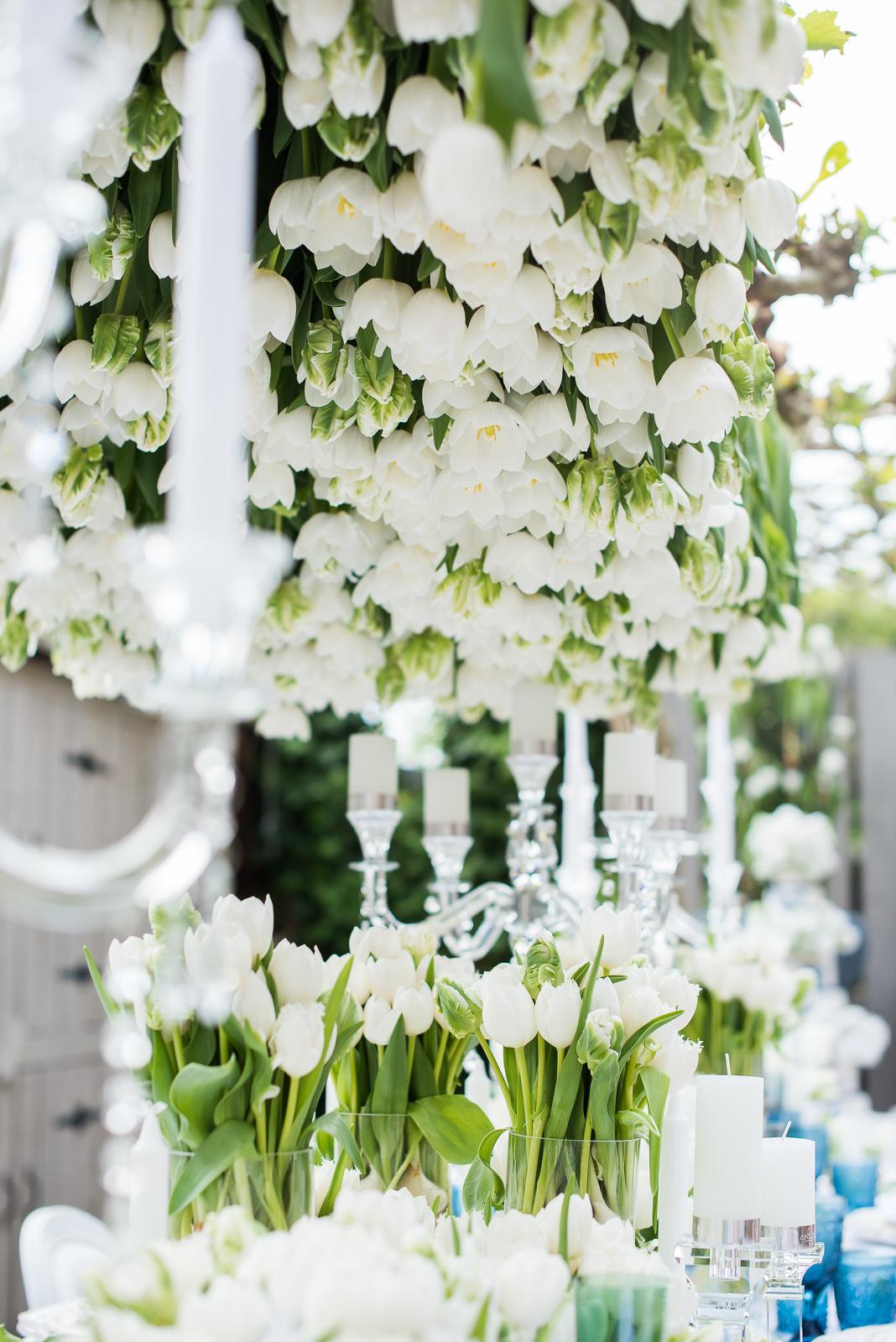tulip_fever_shootLR-0049.jpg