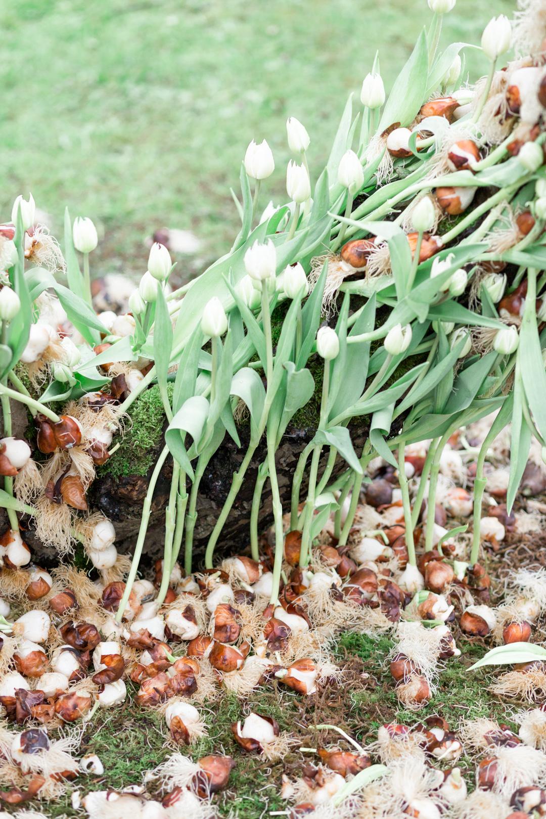Tulip Mania-0008.jpg