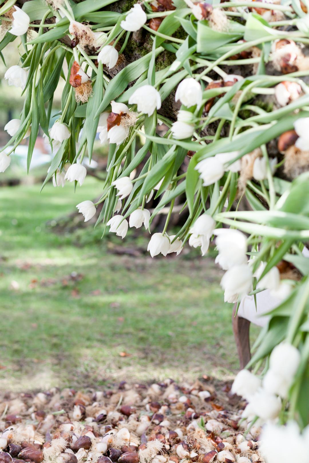 Tulip Mania-0087.jpg