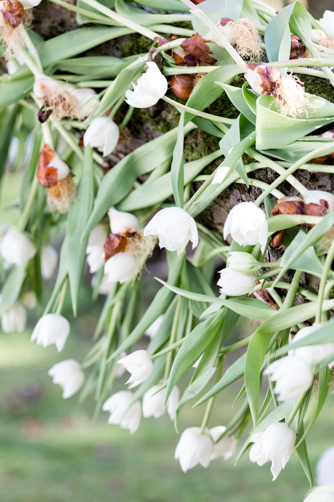 Tulip Mania-0090.jpg