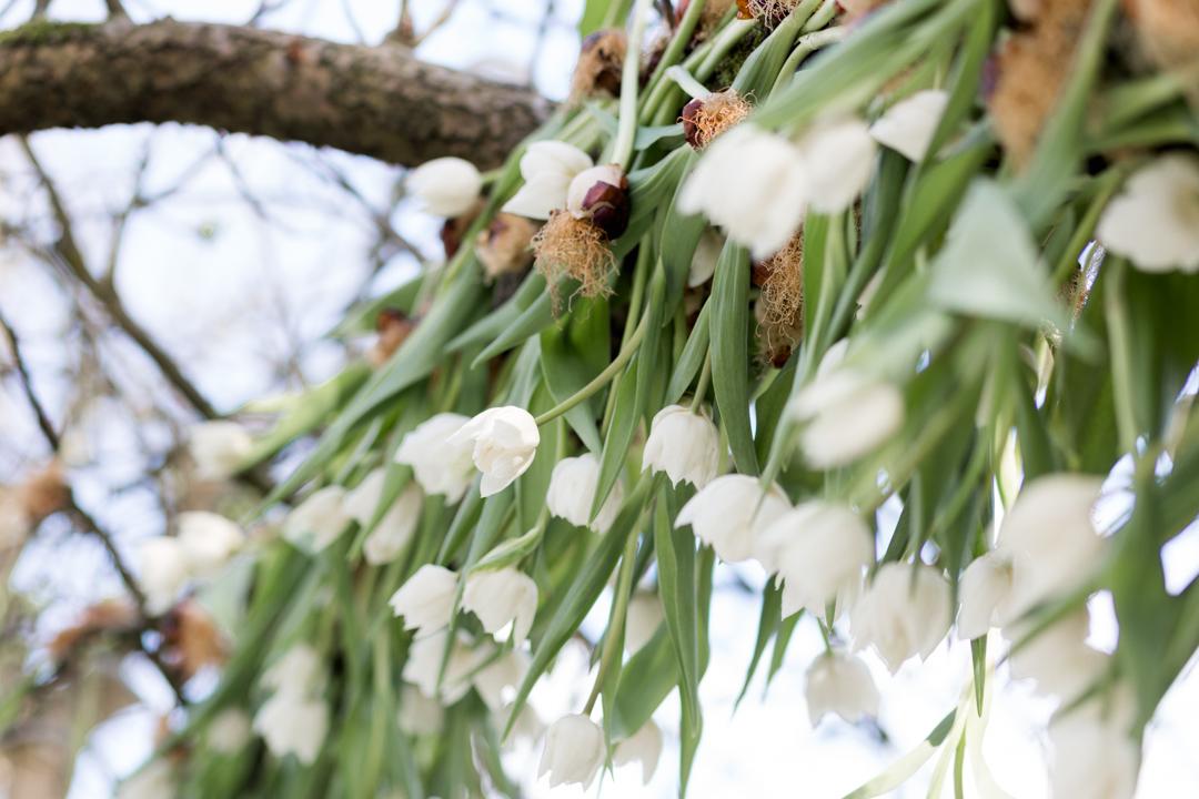 Tulip Mania-0092.jpg