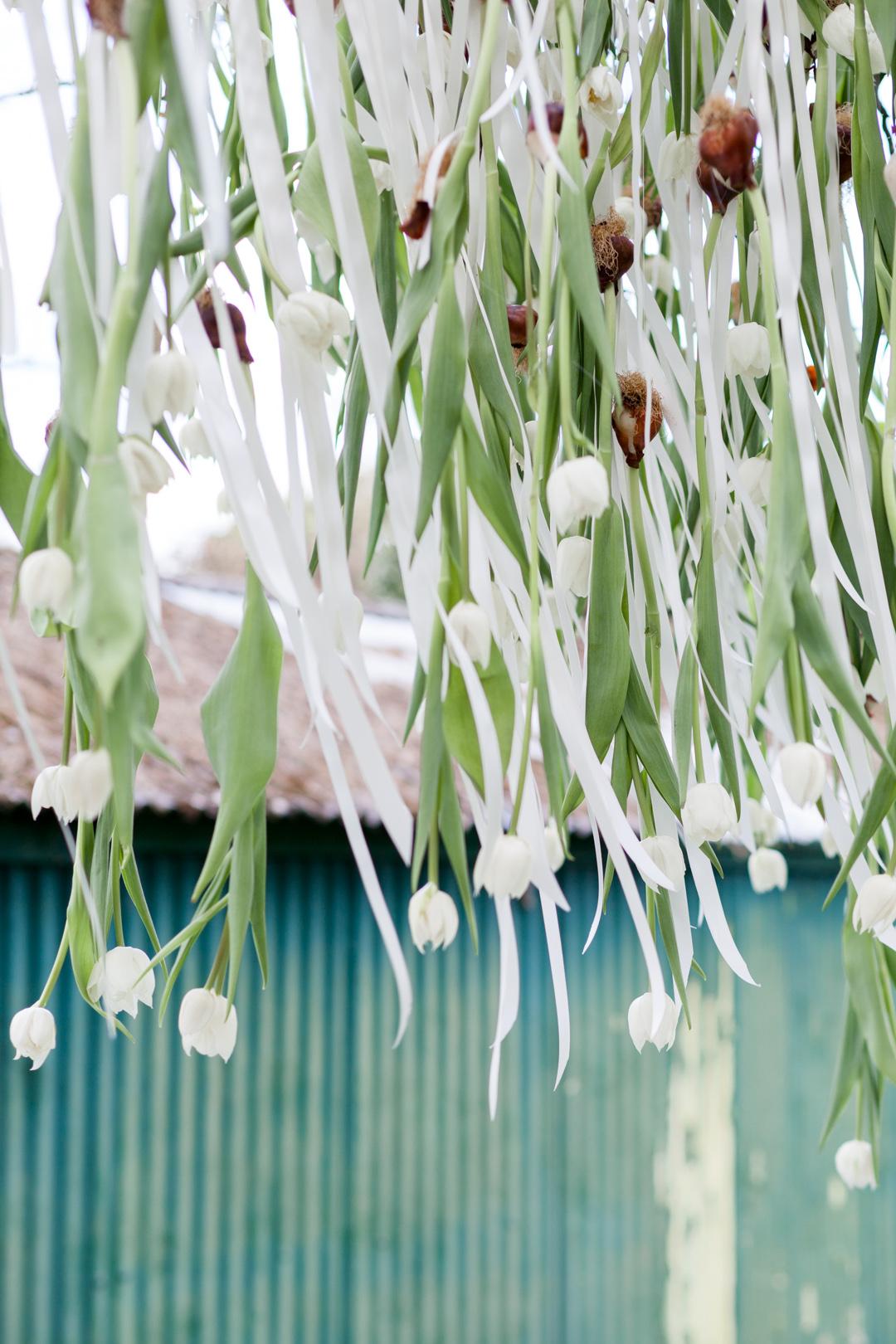 Tulip Mania-0095.jpg