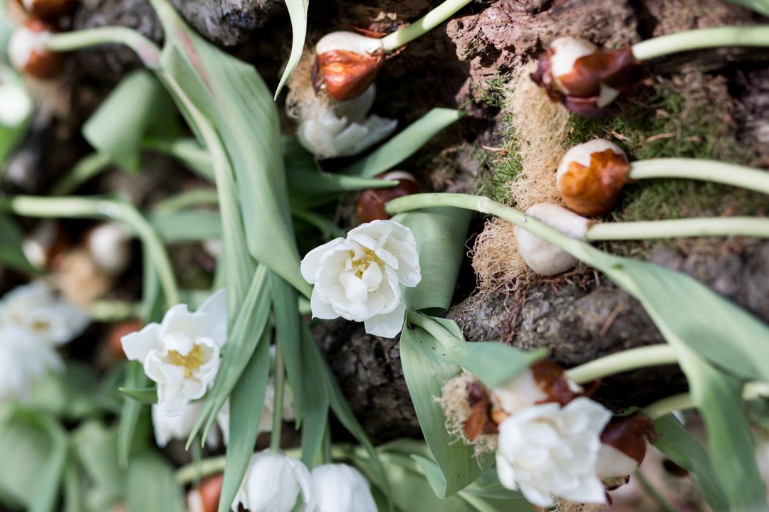 Tulip Mania-0098.jpg