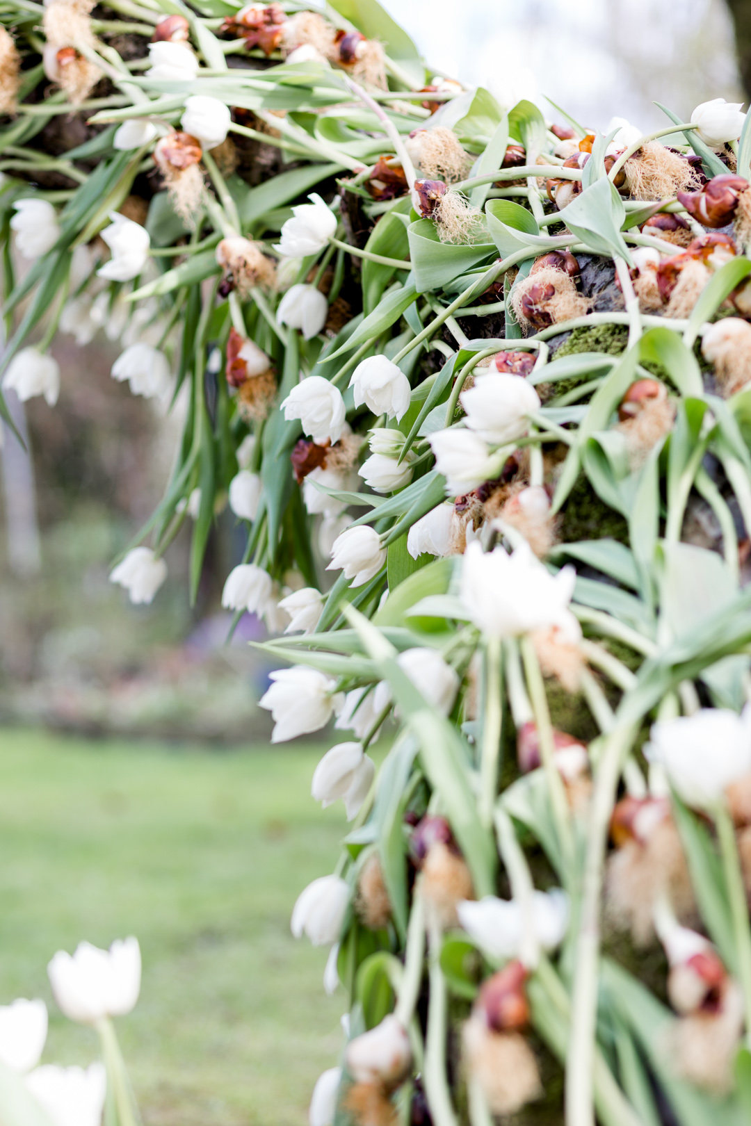 Tulip Mania-0099.jpg