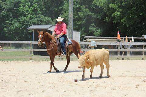 Will teaching a horse to work cattle.