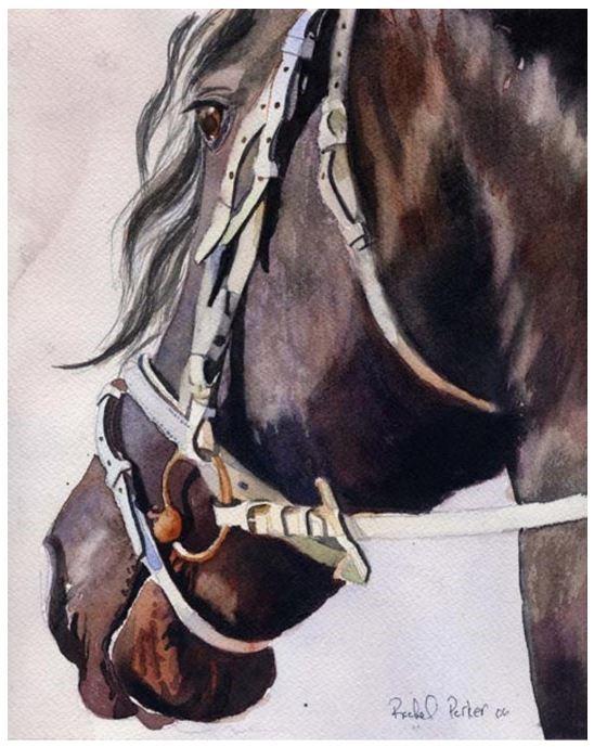 Frisian Morgan Horse Watercolor