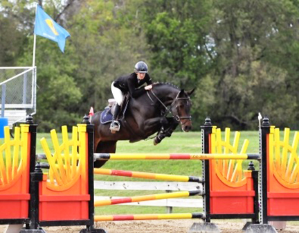 California, 8yr old mare we imported as a 4yr old in foal. Now jumping 1.40m!.jpg