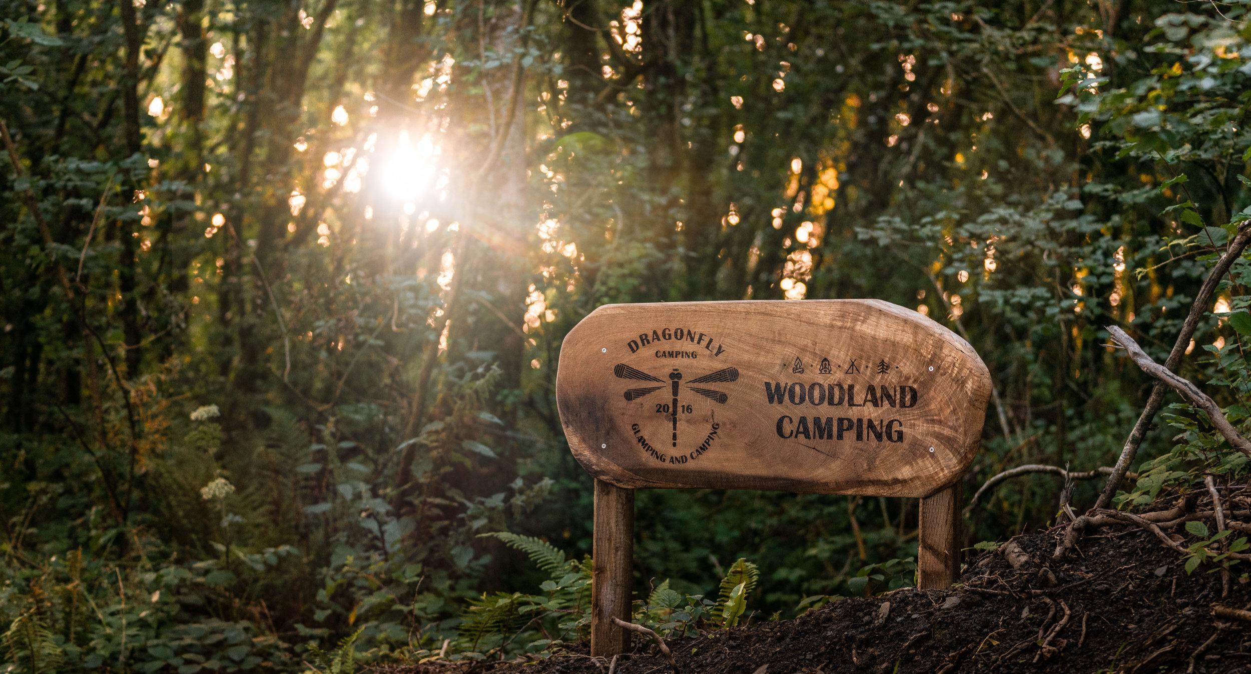 Woodland Camping Pembrokeshire Dragonfly Camping