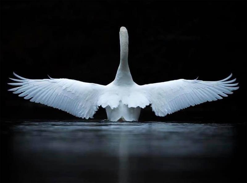 ANGEL'S WINGS - Marco Omiletti