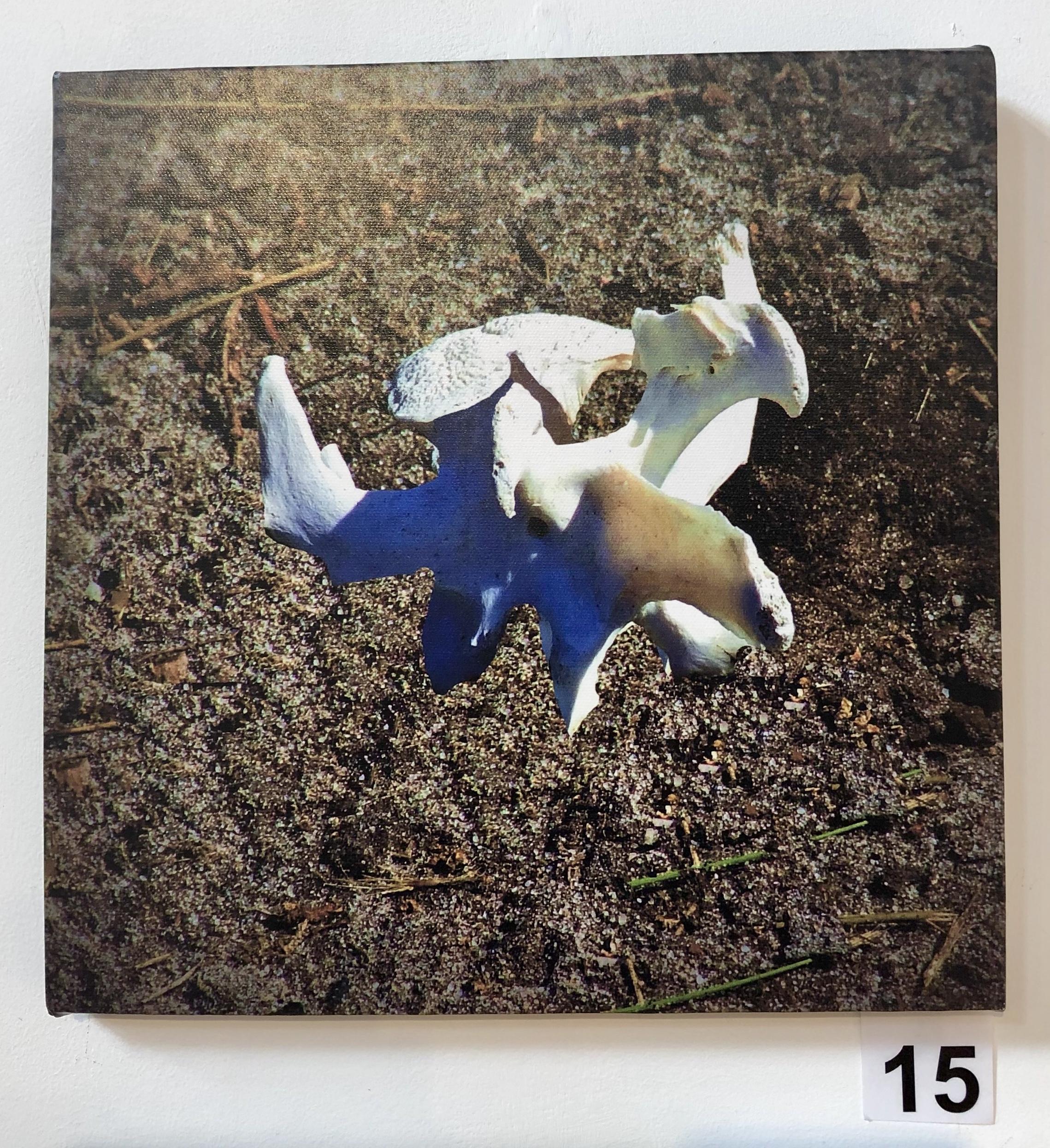 """""""Vertebrae 3 - Kangaroo"""" by Lisa Timms Stevens"""