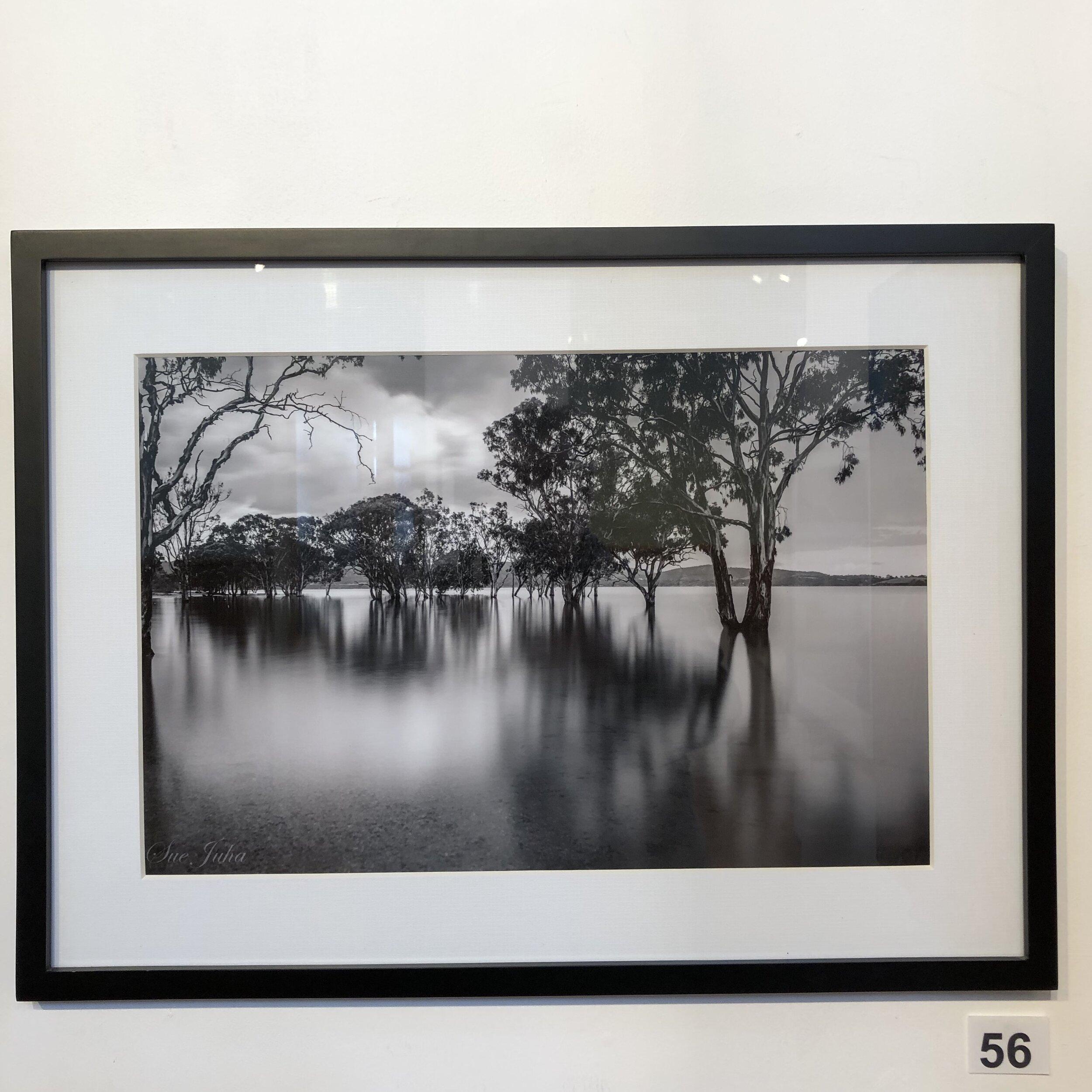 """""""Lake Glenmaggie in B&W"""" by Sue Juha"""