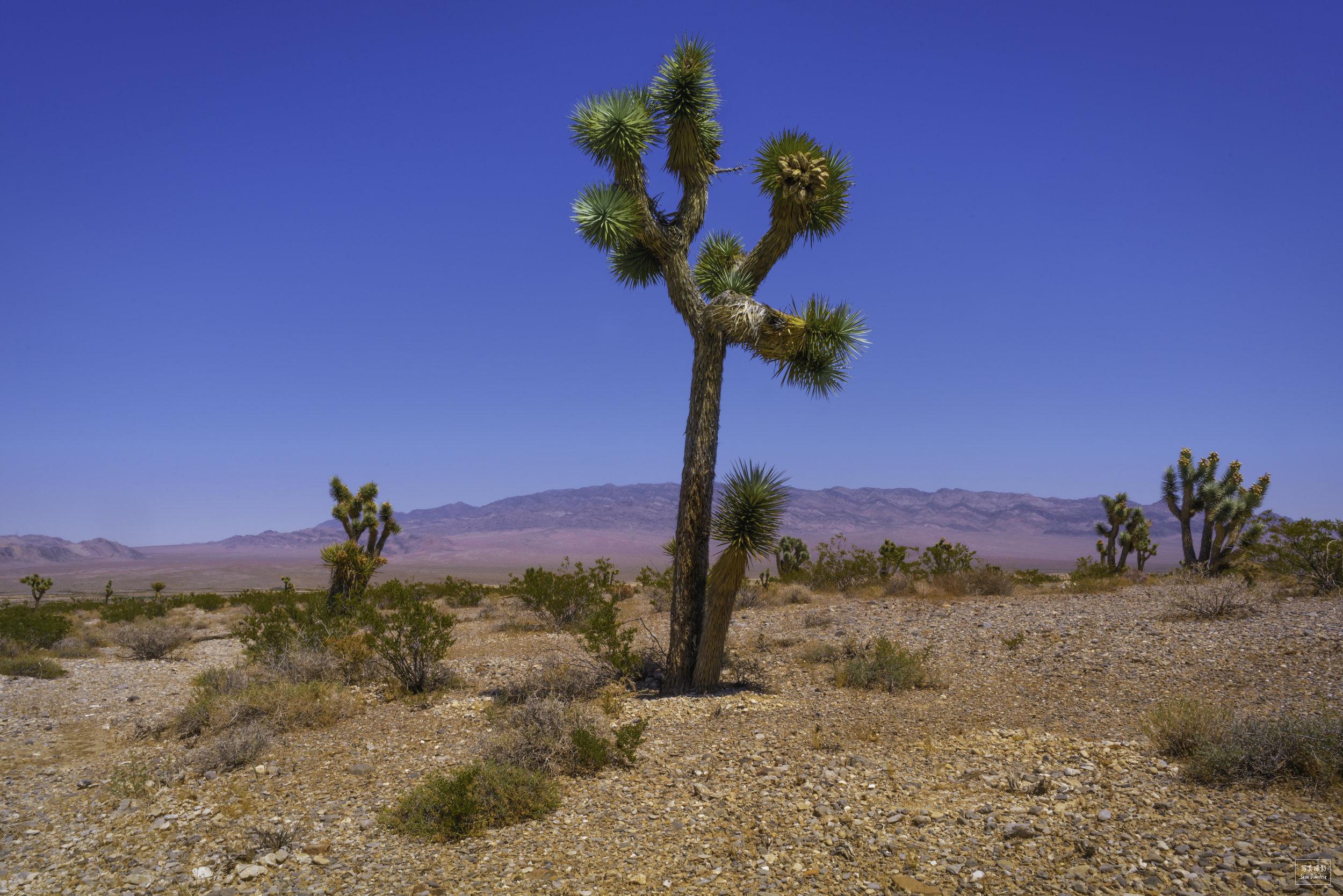 Nevada Cactus.jpg
