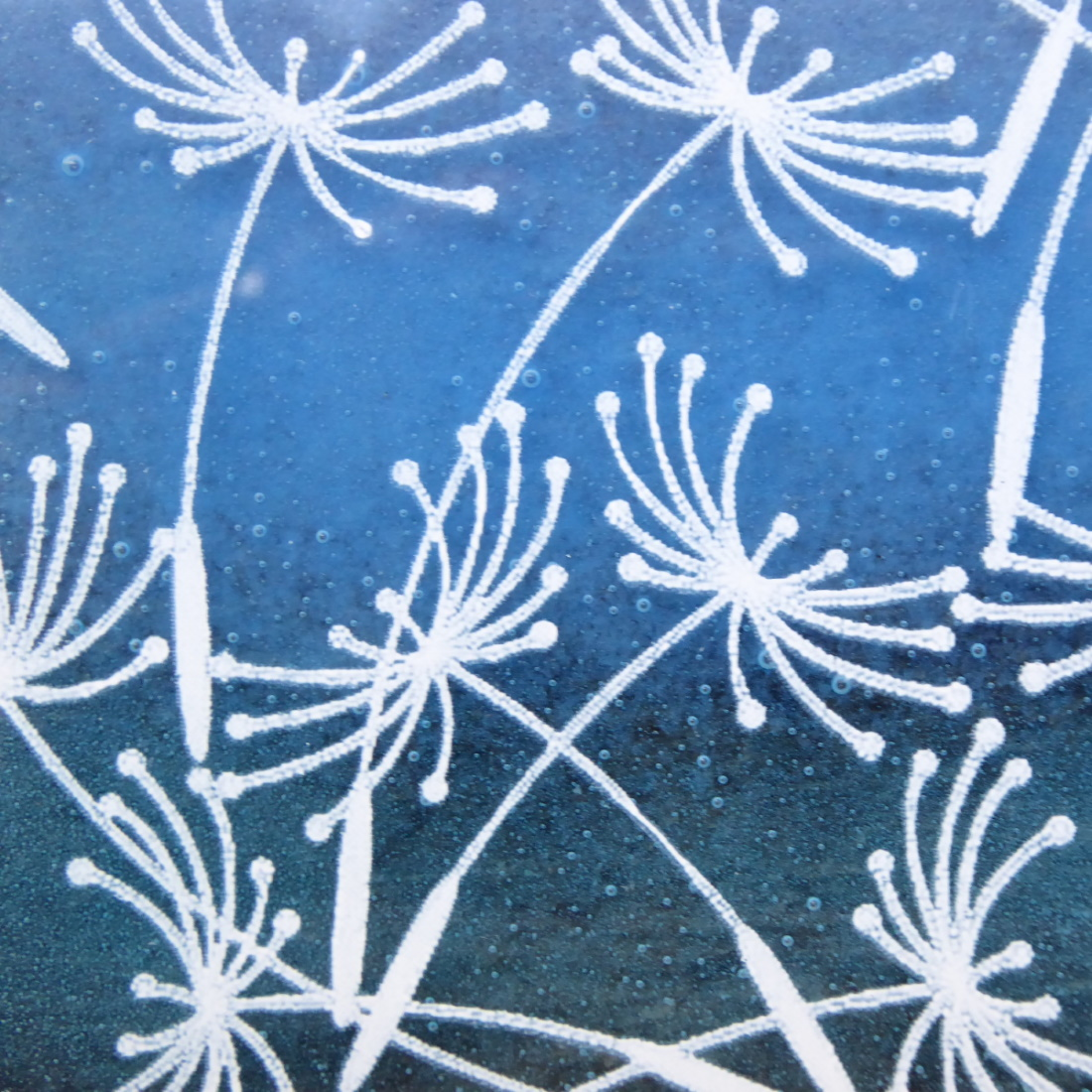 Dandelion clocks close-up