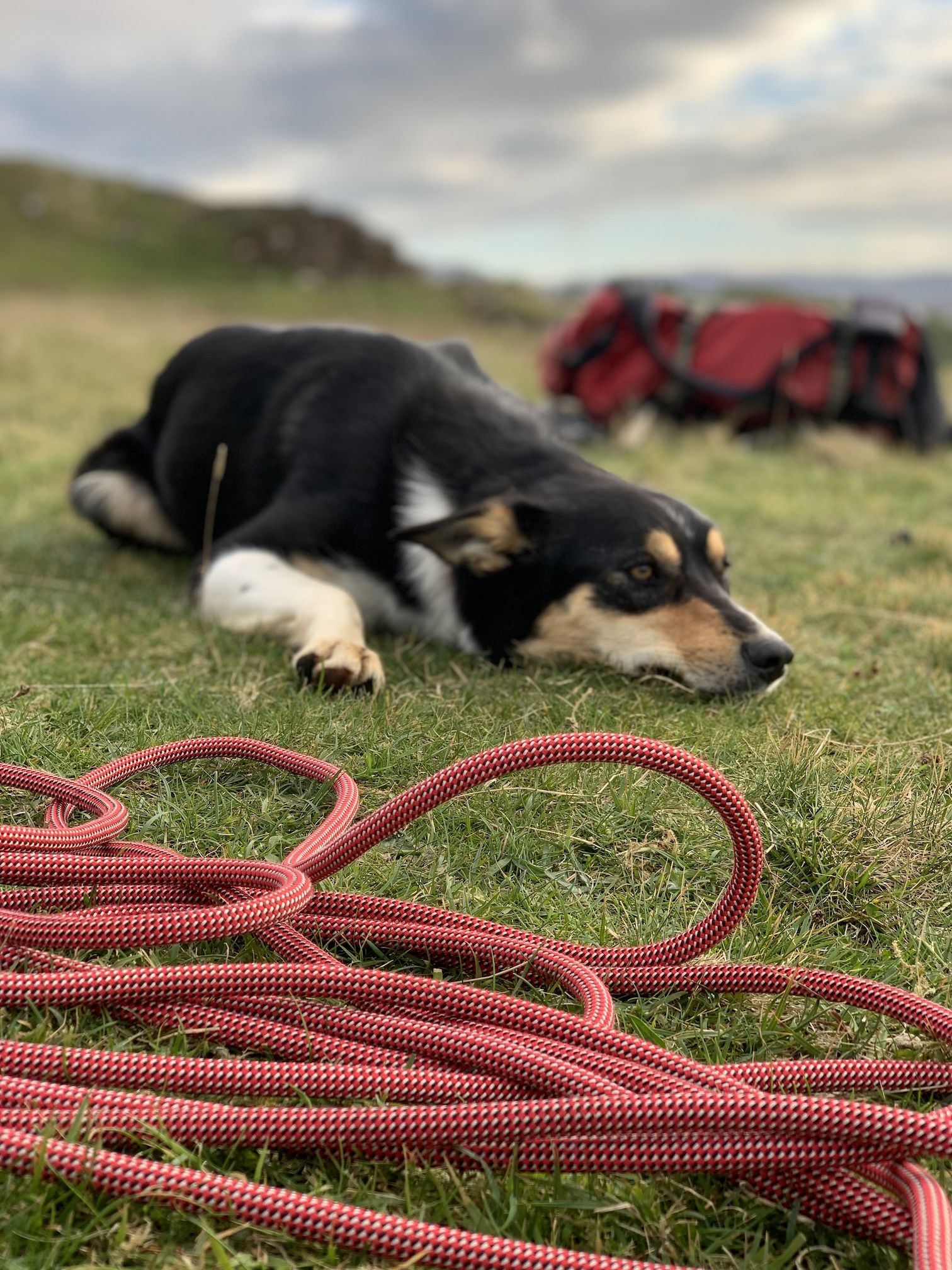 jessie and rope .jpg