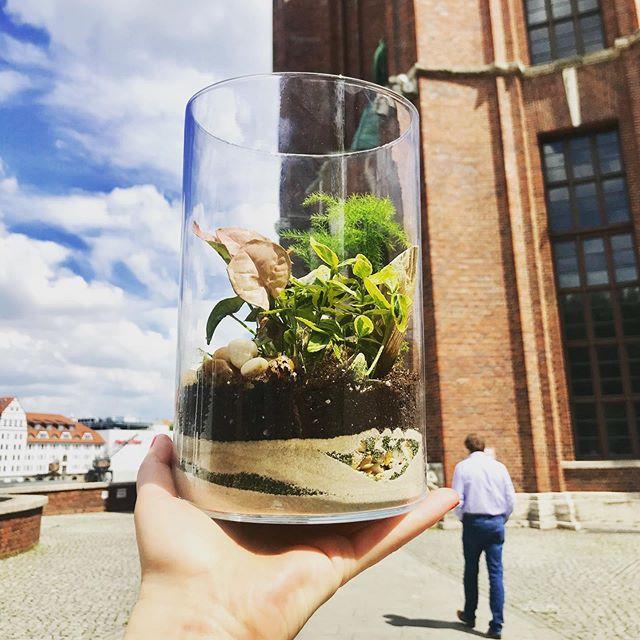 So ein Minigarten im Glas hat schon was, oder? Ich hab mein Terrarium auf dem Schreibtisch stehen und freue mich jeden Tag, wie es sich entwickelt. Am 18.6. ist unser erster Terrarium Workshop in Berlin -  Link in Bio. • • • • #terrariumdesign #terrarium #succulents  #letscreate #create #kreativ #diy #dekoration #deko #dekoliebe #hygge #homeinspiration #inspohome #inspirationalquotes #inspire #quotes #quotesoftheday #zuhause #craft #doityourself #pflanzenmuddi #pflanzenliebe #instaplant #botanicalillustration #botanicals