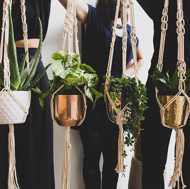 Bei wem von euch schmückt ein Makramee schon die Wohnung? Das Knoten einer Blumenampel ist tatsächlich garnicht so schwer - wer es mal ausprobieren möchte ist herzlich willkommen bei einer PlantNight. • • • • • Makramee #macramee #pflanzenmuddi #home #pflanzenliebe #diy #selbstgemacht #handcrafted #berlin #workshop #dekoration #zimmerpflanzen #urbanjungle #plantsmakepeoplehappy #botanicalhome #plantsofinstagram #retrohome #boho #plantsathome #plantnight #livingroominspo #inspo4interior #greenhome #diylove #inspiration #followme #dekoidee #sowohneich #dekoration #hygge